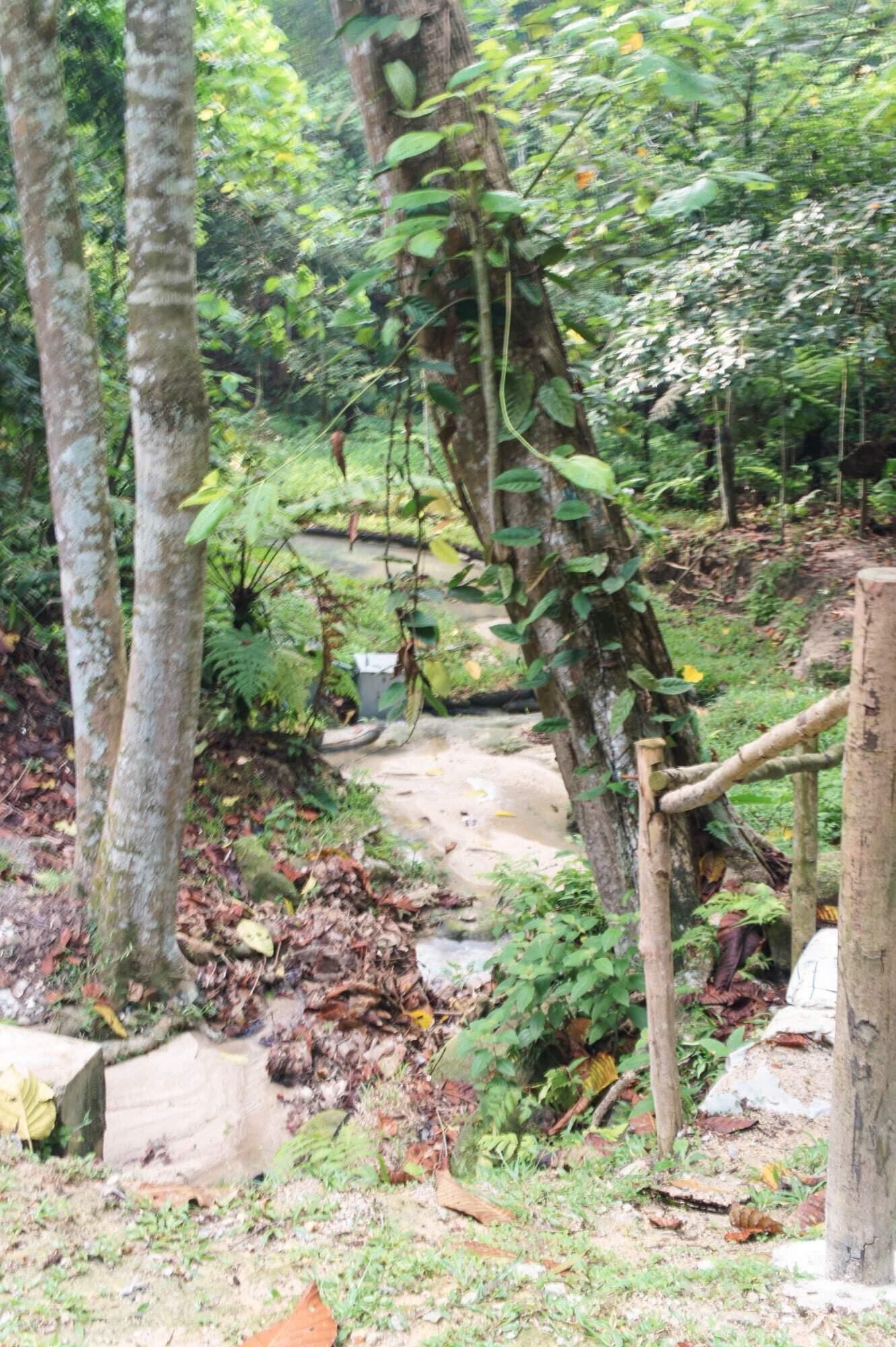 Bukit Kiara Rainforest